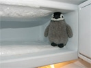 grive dans un frigo